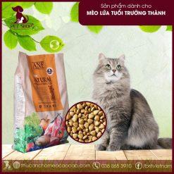 thức ăn hữu cơ cho mèo trưởng thành